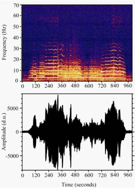 a wave form and spectogram image of harmonic tremor