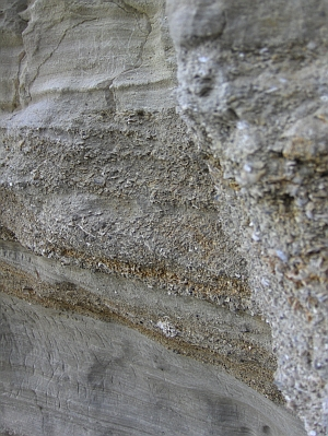 Shells layered into the cliff walls